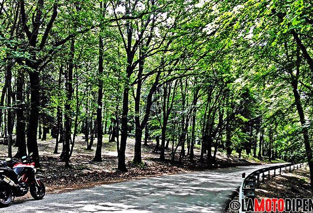 Alla moto scoperta della magnifica Foresta Umbra nel Gargano